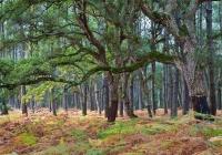 Extraños en un bosque