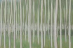 Koldo Badillo · Homenaje a Touluse-Lautrec